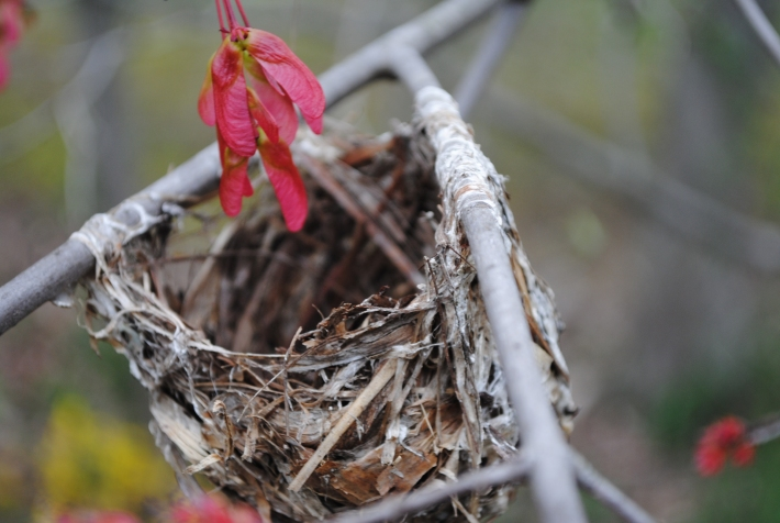 a nest in the tree